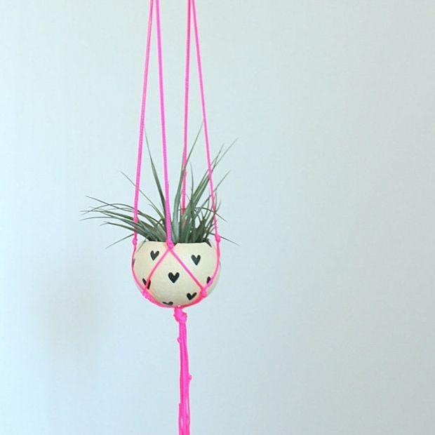 Tillandsien Pflanztopf aufhängen rosa