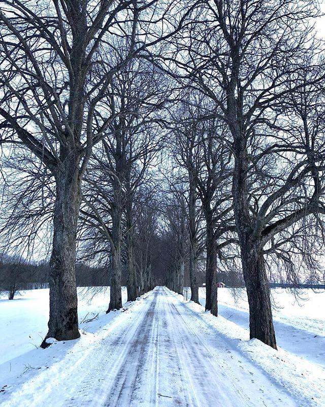 Om snön ligger kvar tänker jag mig fotografera ett bröllopspar vid denna allé i slutet av mars. #bröllopsinspo #bröllop #bröllop2018 #vinterbröllop #wedding #linköping #meralinköping #visitlinköping #lkpg #östergötland #linköpinglive #hejöstergötland #bröllopsfotograf #bröllopsfotografering #weddinginspo