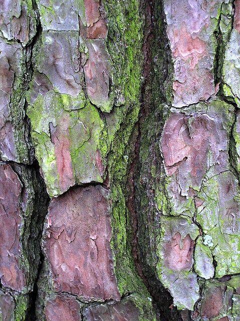 plum and green . tree bark