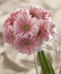 Pink Gerbera Daisy Braidesmaid Bouquet - Braidesmaid Bouquets | Pink Gerbera Daisy Bridal Bouquet | Bridal Flowers | Discount Wedding Flower Packages at BunchesDirect 29.99