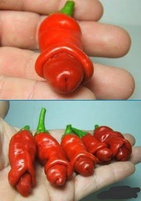 Peter peppers....why not? lol. I might have to grow some of these just to have some funny BBQ conversations!!