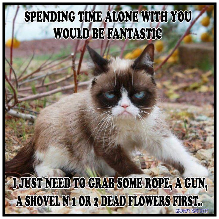 6622 Best Grumpy Cat I Love This Cat Images On