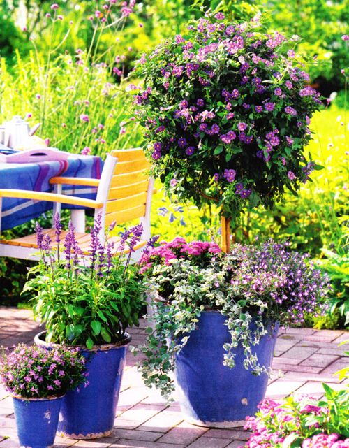 A trio of cobalt blue #garden #pots stand out with bright pink & purple plants & flowers.