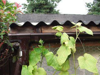 Gartenäffchen: Bewässerung im Garten