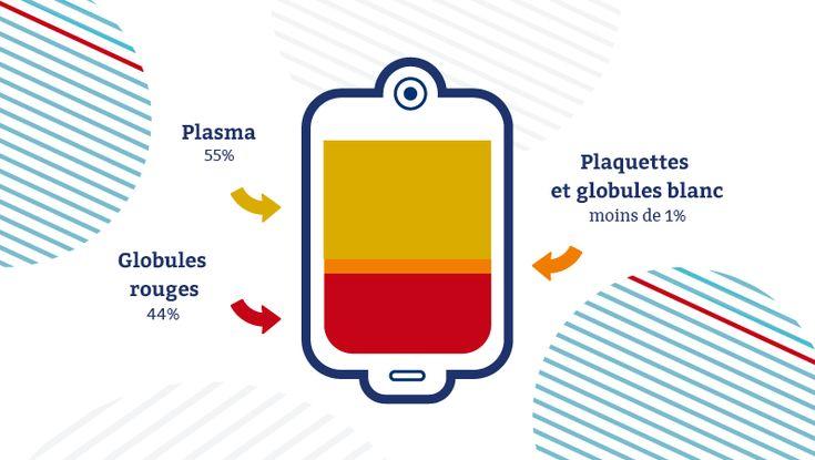 Le sang est composé de 55 % de plasma, 44 % de globules rouges et 1 % de globules blancs et de plaquettes