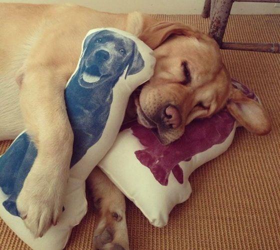 Fauna Labrador Pillow – $30