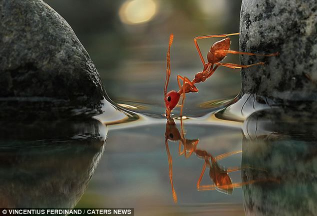 This pic is stunning #antdrinkswater: Insects Photography, Photos Graffi