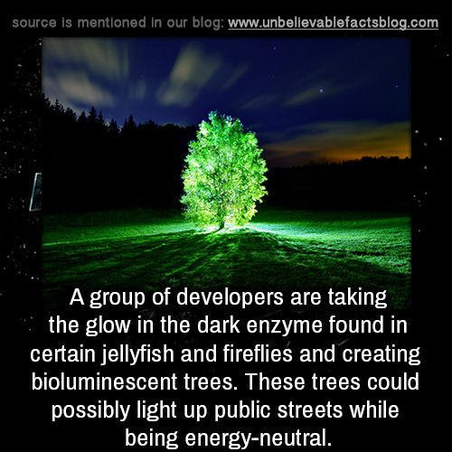 A group of developers are taking the glow in the dark enzyme found in certain jellyfish and fireflies and creating bioluminescent trees. These trees could possibly light up public streets while being...