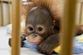 Baby! animal-love
