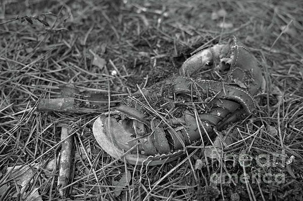 #shoe #conceptual #abandoned