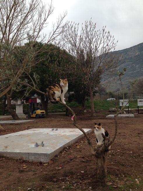 cats on a tree, Ephesus