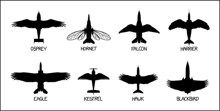 """xkcd mashup: """"Be careful—it's breeding season, and some of these can be *extremely* defensive of their nests."""""""