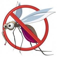 Jak účinně bojovat proti mravencům a komárům