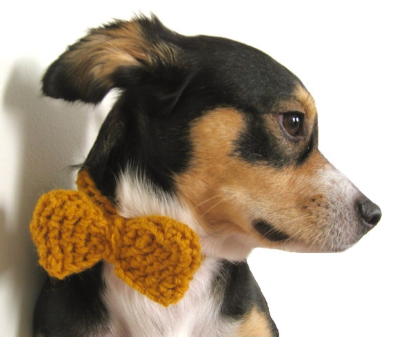 precious for a pooch on a special occasion. :]