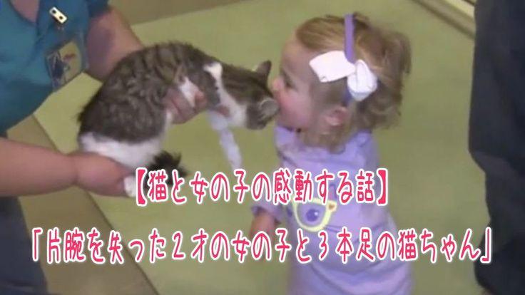 【1分涙腺崩壊】片腕を失った2才の女の子と3本足の猫ちゃん【猫と女の子の感動する話】  片腕を失った2才の女の子と3本足の猫ちゃん。2人は出会って一瞬で仲良しに!   ☆☆☆☆☆☆ 涙腺崩壊-1分で感動!では、 泣ける話、感動する話を 厳選して配信しています。   音と画像で心震える感動を…。  チャンネル登録すると 新しい動画がスグに見れます☆ ▼▼▼ http://www.youtube.com/subscription_center?add_user=namidaafureru