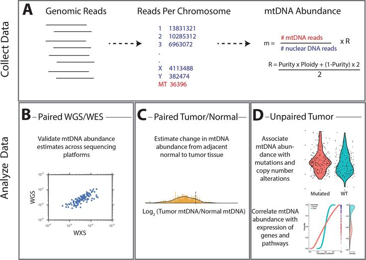 Mitochondrial DNA copy number variation across human cancers