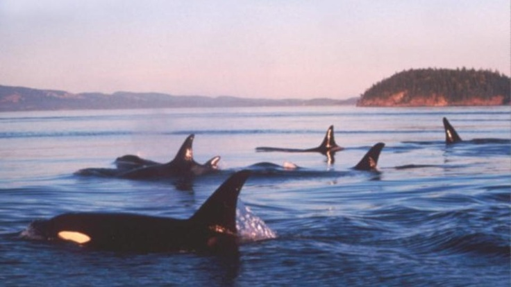 Kodiak, Alaska... I love seeing this!