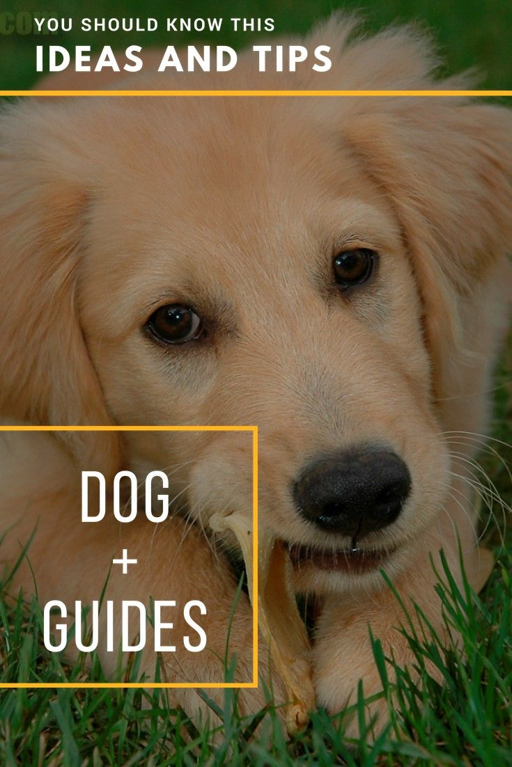 Dog Walking Stop Struggling When It Comes To Training Your Dog Now Training Your Dog Dogs Dog Walking