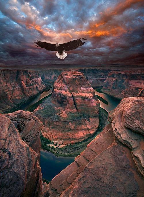 eagle-Horseshoe Bend