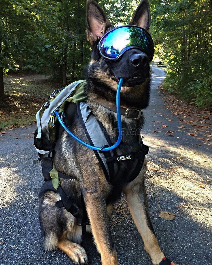 German Shepherd K9 Soldier