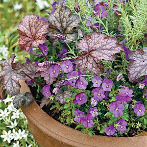 The Perfect Mixer | 'Sorbet Blue Heaven' violas pair nicely with 'Purple Palace' heuchera and the gray foliage and purple blooms of Spanish lavender.Garden Container, Gardens Ideas, Gardening Flow, Container Garden, Southernliving Com, Blue Heavens, Gray Foliage, Viola Gardens, Gardens Growing