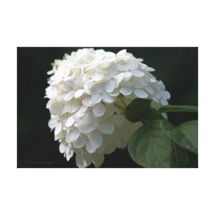 White Lime Hydrangea Flower Canvas Print - flower print gifts floral idea giftideas