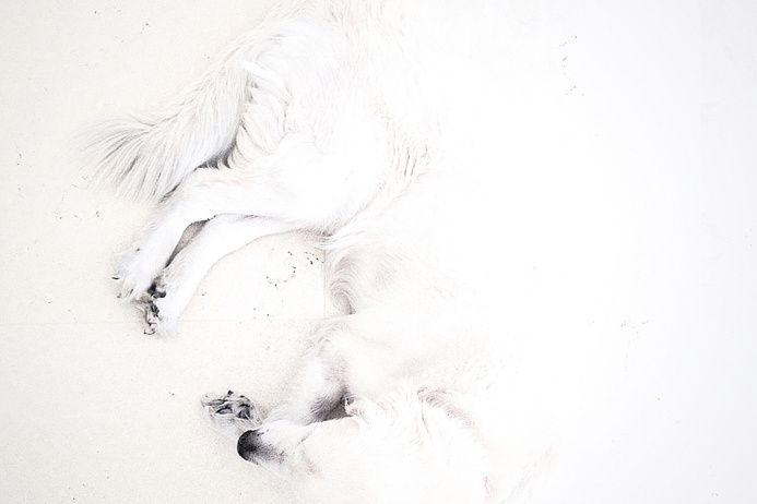 Айфон как искусство   Белое на белом: Тедди Коэн из Израиля сделал снимок своей собаки на белоснежном пляже Средиземного моря