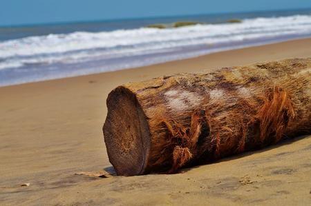 Coconut Tree Bark Photo by Akhilesh Raja — National Geographic Your Shot