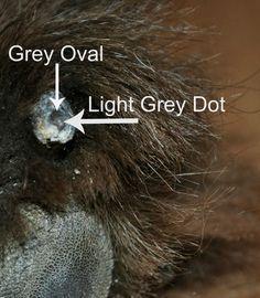 The Secret Grey Dot Inside A Dog's Black Nail