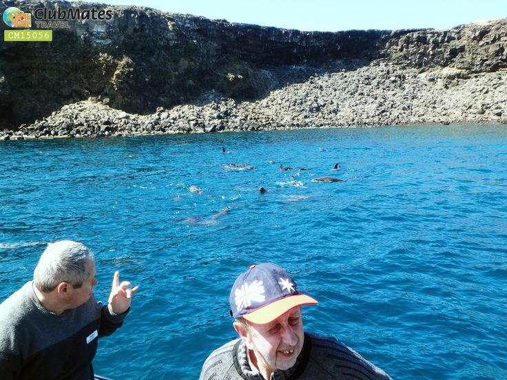 cruise to view the Southern Right Whales which rear their calves off Logans'