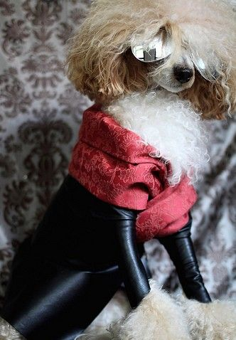 Paw-ty like a rockstar! #Fashionable #Canines #Pampered #Pooch