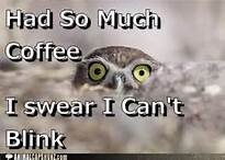 Good Morning Funny Animals - Bing Images