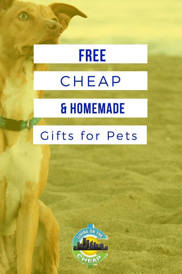 Free Cheap And Homemade Gifts For Pets Pet Insurance Reviews