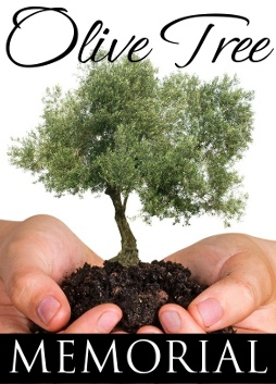 Plant Olive Trees for Celebrations  or in Memory of a Loved Ones
