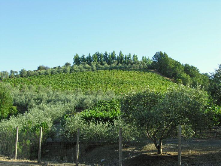 #winecountry #views #LatifeHayson