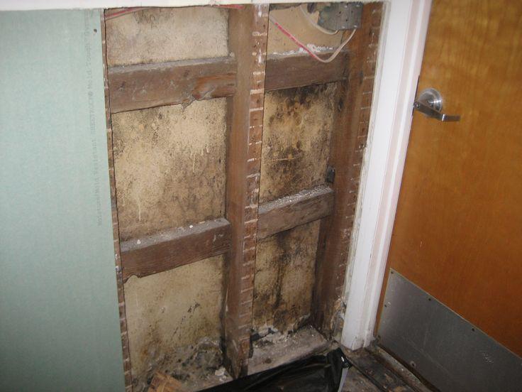 drywall forward mold growth on backside of drywall