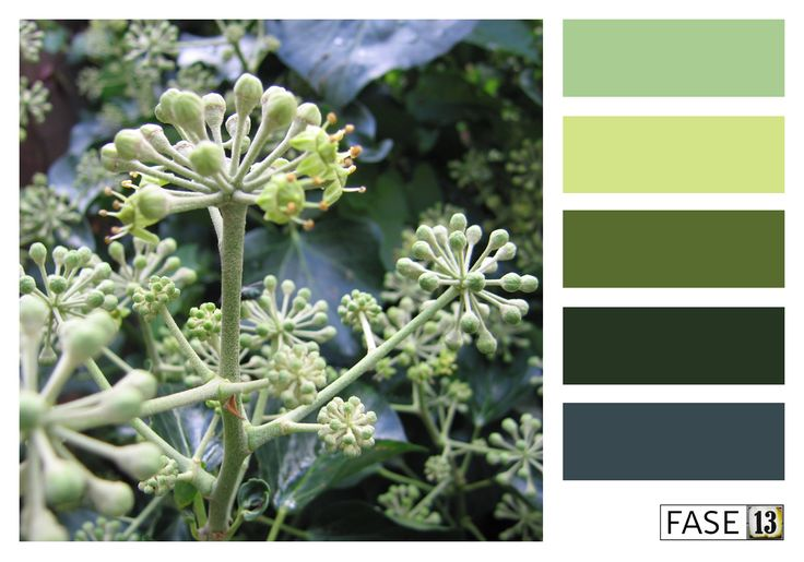 Kleurinspiratie voor je interieur! ~ #colourinspiration by #FASE13 ~ Ivy Green hues