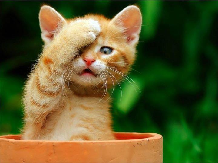 .Orange Cat, Kitty Cat, Take Pictures, Peek A Boos, Pets, Flower Pots, Kittens, Clay Pots, Animal