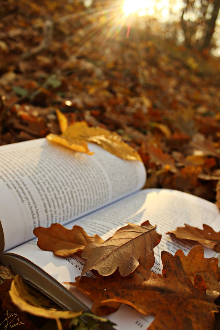 Book Photography. Autumn Shot. We love Books. The Book Seeker Project. Teenager girl photographer @ionpaulaelena. Romania