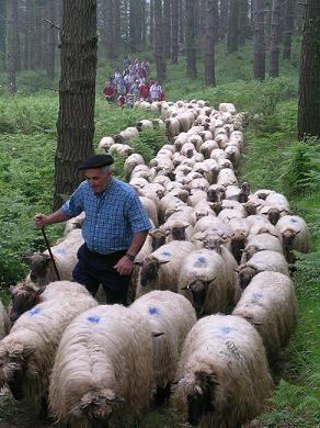 Trashumancia de ovejas entre Zeanuri y los pastos de Gorbea ,  Spain