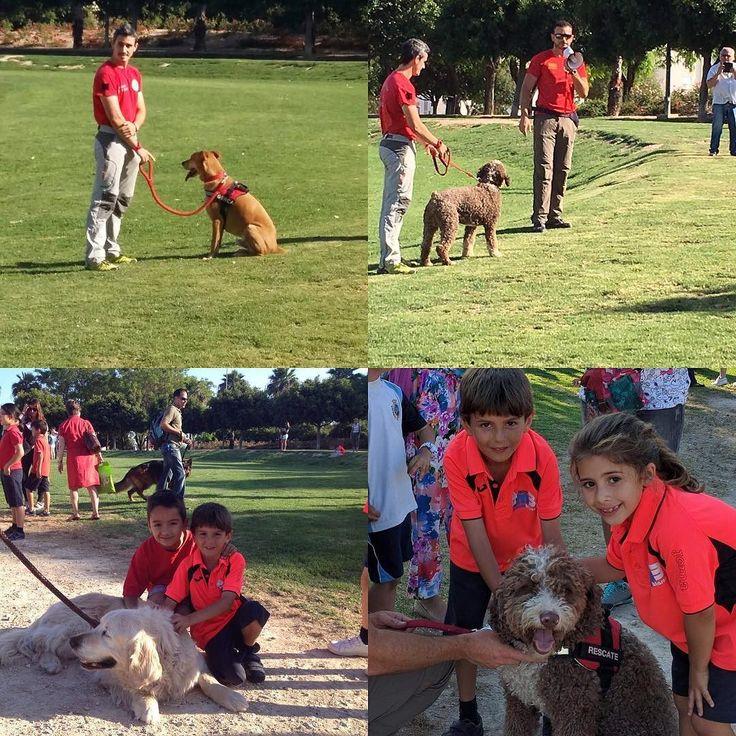Gracias al programa Judo-Educa de Club de Judo Miriam Blasco hoy los judokas del Colegio Agustinos han disfrutado de la Exhibición de la Unidad Canina de la Policía Nacional.