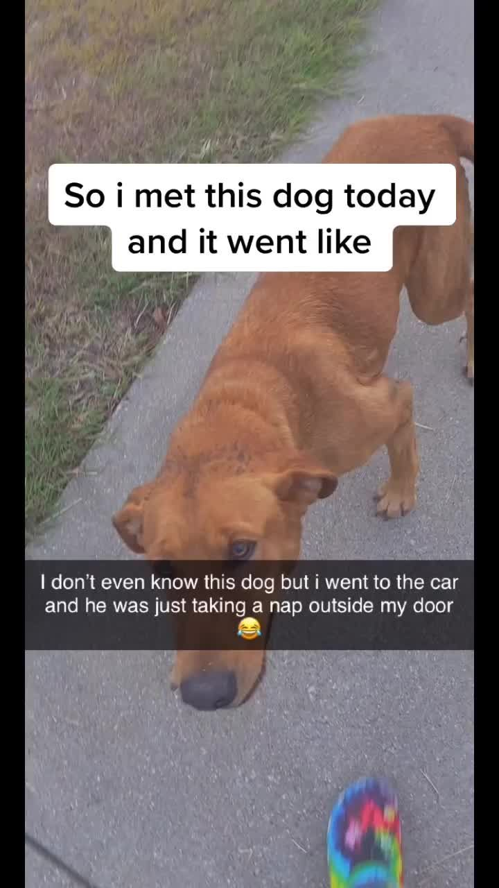 Pin By Audrey Weglein On Misc Deep Thought Quotes Funny Memes Funny Dogs