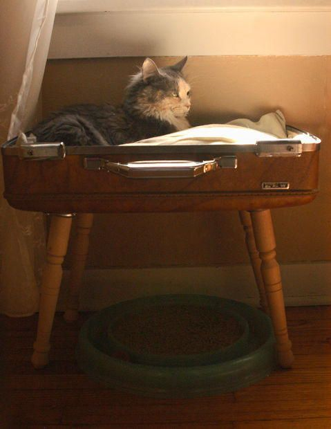 Stylish and Simple Suitcase Pet Bed