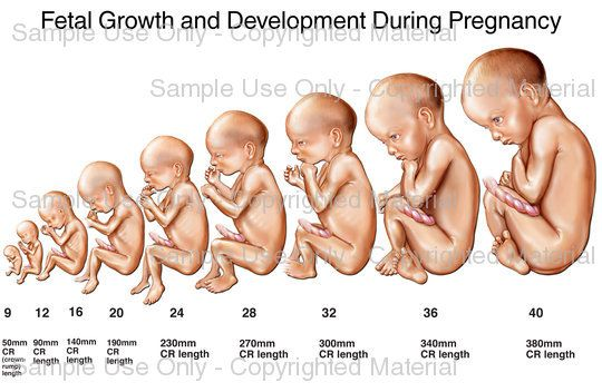 Stages of Fetal Development Week by Week | features nine images ...