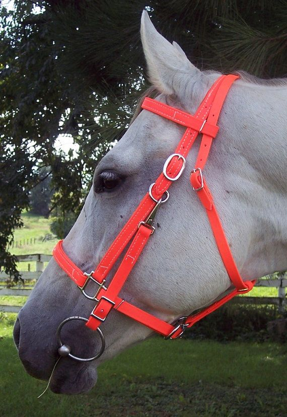 HUNTERS ORANGE HALTER BRIDLE COMBO HEADSTALL  ***Headstall only, no reins****  Made from 5/8 Beta Biothane  PLEASE SPECIFY SIZE  DRAFT HORSE HORSE COB