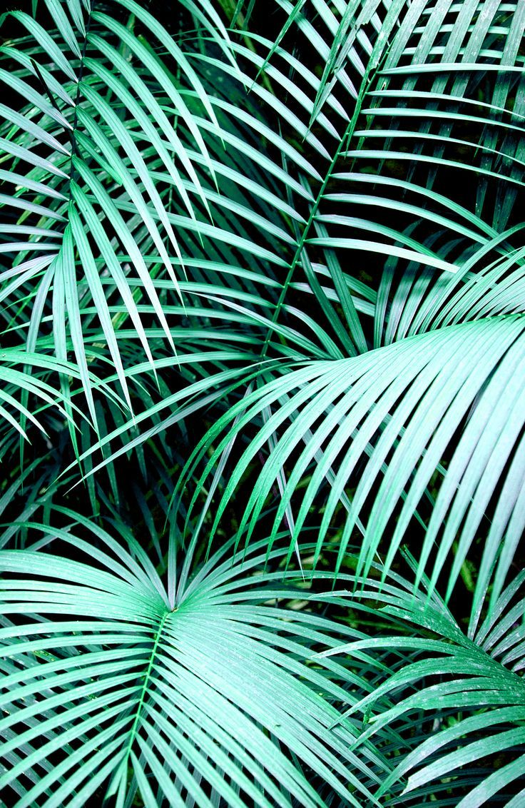 palm fronds tumblr - photo #5