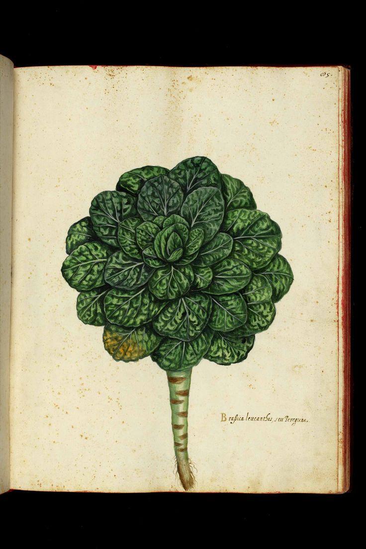 Magnum opus, Ulisse Aldrovandi (1522-1605), Università di Bologna