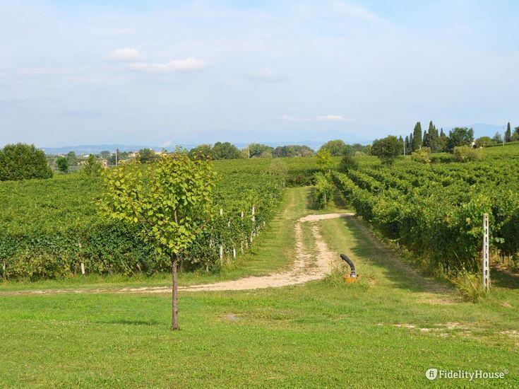 Buonissima l'uva e buono il vino dei colli veronesi. C'è sempre una strada per…