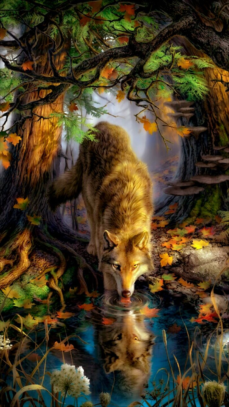 Mister wolf stopping for a drink in the woods