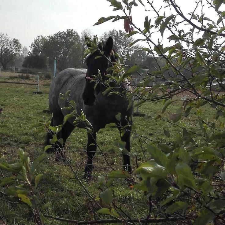 Wenn Sie dem Pferd zuerst einen Apfel vom Baum und das Pferd holen wollen …   – The horses